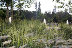 213_9403 (Night-City-Dream) Tags: москва россия природа красота гармония благоустройство вднх усадьба пруд живопись moscow russia vdnkh nature harmony architecture