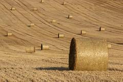 Par-ci par-là - here and there (gopillentes) Tags: moissons paille bottes harvest fields balles balls summer agriculture été récoltes traces champs landscape paysage