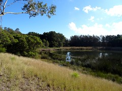 Sydney Olympic Park (fchmksfkcb) Tags: sydneyshowgrounds giantsstadium groundhopping greater western sydney giants brisbane lions australia australien australianfootball afl sydneygiants gwsgiants greaterwesternsydneygiants brisbanelions