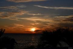 Stunning Sunset Tampa Bay Florida - IMRAN™ (SOOC) (ImranAnwar) Tags: blessed d850 nikon tampabay water reflections apollobeach statute florida silhouette palmtrees clouds ocean bay sunset imrananwar lifestyle imran seaside unitedstatesofamerica