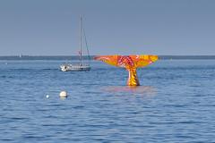Bassin d'Arcachon (pictopix) Tags: arcachon baleine bassin bassindarcachon littoral mer