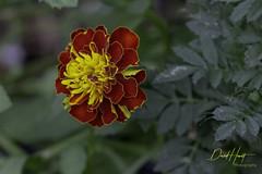 Yellow and red (davidhewett1964) Tags: sanantonio sanantoniobotanicalgardens sanantoniotx texas