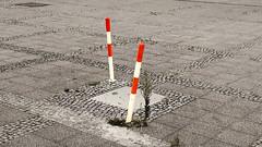 bln | zwei versunke fernsehtuerme (stoha) Tags: fernsehturm poller pfosten rotweiss redwhite pltz berlin berlino berlijn germany germania deutschland