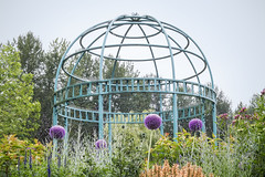 Alliums and Gazebo at Hawthorne Park (ScarletBlack) Tags: hawthornepark hawthorneparksurrey garden gardenpark gardenphotography allium flower