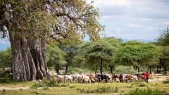 Tanzania (Markus Hill) Tags: life africa travel animal canon landscape tanzania afrika arusha manyara tansania 2019