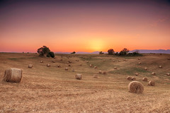 hay harvest (judith.kuhn) Tags: travel france provence valensole nature landscape meadow haybales sunrise sky alpesdehauteprovence