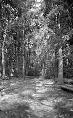 Illuminated path (Rosenthal Photography) Tags: asa400 kleinbildformat ilfordlc2912920°c9min ff135 analog ilfordhp5 epsonv800 olympustrip35 schwarzweiss frühling ilfordrapidfixer 35mm sommer 20190601 forest illuminatedpath path track trail way pathway summer june spring sun sunny sunshine mood backandwhite olympus olympus35 trip trip35 40mm f28 ilford hp5 hp5plus lc29 129 14 rapid fixer epson v800 trees