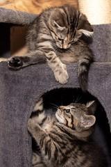 Kätzchen beim Spielen (Jana`s pics) Tags: katzen katzenkinder katzenhilfe kaetzchen kitten spielen cats animals animalphotography tierfotografie tiere tierschutz tierheim