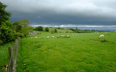 The Sheep Breeds in Cumbria and the Lake District (Adam Swaine) Tags: sheep flockofsheep cumbria farming englishfields rural england english englishlandscapes uk ukcounties counties countryside aonb pennines 2019 adamswaine beautiful trees nature
