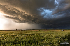 Waves of Grain (kevin-palmer) Tags: montana june summer nikond750 weather storm stormy severe thunderstorm evening wheat sigma14mmf18 field windy sunlight gold golden rain grassrange clouds