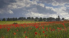 Before the rain (Kevin_Barrett_) Tags: flowers poppy red nature landscape sky dramatic scenic scenery serene field
