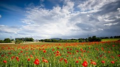 Wow (Kevin_Barrett_) Tags: flowers poppy red nature landscape scenic scenery serene sky field dramatic
