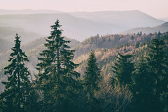 black forest trees with wind generators (Al Fed) Tags: 20190420 black forest riding motorcycle woods wind engines turbines eco power tour