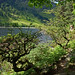 2019-06-07 06-22 Irland 827 Wicklow Mountains, Glendalough, Upper Lake