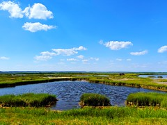 low country (ekelly80) Tags: summer june2019 easternshore delmarvapeninsula chincoteague virginia lowcountry grass water view green