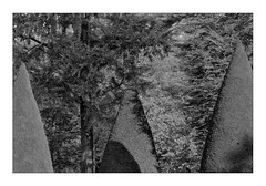 these trees (Armin Fuchs) Tags: arminfuchs lavillelaplusdangereuse würzburg hofgarten residenzgarten light shadows trees
