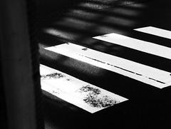 干渉縞 (interference fringes) (Dinasty_Oomae) Tags: leicaiiia leica ライカiiia ライカ 白黒写真 白黒 monochrome blackandwhite blackwhite bw outdoor 東京都 東京 tokyo chiyodaku 千代田区 street