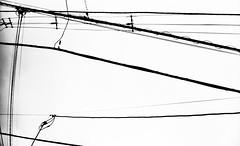 収束帯 (convergence zone) (Dinasty_Oomae) Tags: leicaiiia leica ライカiiia ライカ 白黒写真 白黒 monochrome blackandwhite blackwhite bw outdoor 市川市 市川 ichikawa 千葉県 千葉 chiba 送電線 電線 utilitywire