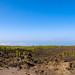 Lavafeld neben Pinienbäume im Nationalpark Teide auf Teneriffa, Spanien