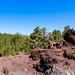 Lavafelsen in der Nähe von Pinienbäume im Nationalpark Teide auf Teneriffa, Spanien