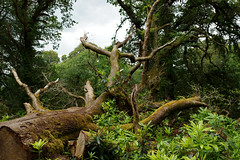 2019-06-07 06-22 Irland 618 Killarney, Muckross Lake Walk (Allie_Caulfield) Tags: foto photo image picture bild flickr high resolution hires jpg jpeg geotagged geo stockphoto cc sony alpha 77 sommer summer irland ireland eire killarney wanderung hike muckross house kerry lough leane lake trail walk