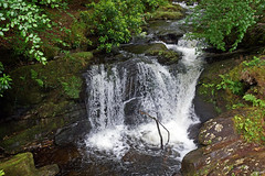 2019-06-07 06-22 Irland 613 Killarney, Muckross Lake Walk, Torc Waterfall (Allie_Caulfield) Tags: foto photo image picture bild flickr high resolution hires jpg jpeg geotagged geo stockphoto cc sony alpha 77 sommer summer irland ireland eire killarney wanderung hike muckross house kerry lough leane lake trail walk wasserfall water fall