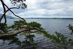 2019-06-07 06-22 Irland 580 Killarney, Muckross Lake Walk (Allie_Caulfield) Tags: foto photo image picture bild flickr high resolution hires jpg jpeg geotagged geo stockphoto cc sony alpha 77 sommer summer irland ireland eire killarney wanderung hike muckross house kerry lough leane lake trail walk