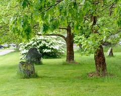 Stonehedge (joeldinda) Tags: tree park lawn portland bogueflats spring may nikon1v2 v2 rock trail 4614 ioniacounty 1v2 nikon michigan 2019