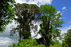 2019-06-07 06-22 Irland 578 Killarney, Muckross Lake Walk (Allie_Caulfield) Tags: foto photo image picture bild flickr high resolution hires jpg jpeg geotagged geo stockphoto cc sony alpha 77 sommer summer irland ireland eire killarney wanderung hike muckross house kerry lough leane lake trail walk