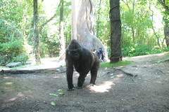 IMG_8581 (neatnessdotcom) Tags: bronx zoo wcs park animal new york city tamron 18270mm f3563 di ii vc pzd canon eos rebel t2i 550d