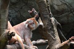 IMG_8718 (neatnessdotcom) Tags: bronx zoo wcs park animal new york city tamron 18270mm f3563 di ii vc pzd canon eos rebel t2i 550d