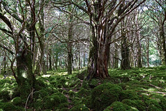 2019-06-07 06-22 Irland 575 Killarney, Muckross Lake Walk (Allie_Caulfield) Tags: foto photo image picture bild flickr high resolution hires jpg jpeg geotagged geo stockphoto cc sony alpha 77 sommer summer irland ireland eire killarney wanderung hike muckross house kerry lough leane lake trail walk