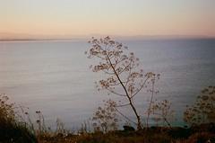 La sete (michele.palombi) Tags: southitaly film35mm analogicshot mediterraneo