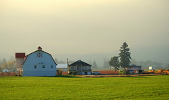 THE FIREHALL IS A BARN......IN KEEPING WITH THE AREA.  NICE...  HATZIC AREA, FRASER VALLEY,  BC. (vermillion$baby) Tags: fraservalley missionarea nicomenslew agriculture barn bc cloud di farm field fog green landscape mist pasture tree vista