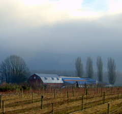 FOG LIFTING SOMEWHAT...HATZIC PRAIRIE NEAR MISSION IN THE FRASER VALLEY,  BC. (vermillion$baby) Tags: fraservalley missionarea nicomenslew agriculture barn bc cloud di farm field fog landscape mist pasture tree vista