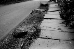 TreeStumps (Connor Simon) Tags: bw outside t90 canon darkroom arista100