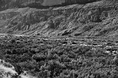 A Look Across a Field of Trees to the Sierra Ponce Cliffs (Black & White, Big Bend National Park)
