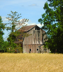 Warping barn wood (Larry the Biker) Tags: barn farm farming ag agriculture rural ruralamerica country washingtontownship michigan grain wheat harvest