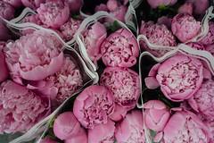 Peonies (JoelZimmer) Tags: 24mmf28 brooklyn florals newyork nikond750 parkslope