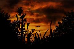 Sunset (lightersideofdark) Tags: sunset night dark silhouette floodlight