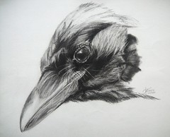 THE OBSERVER (Sketchbook0918) Tags: crow bird avian wildlife animal charcoal graphite drawing paper expressive observing portrait illustration realism fineart art