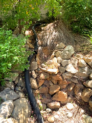 Pond/Waterfall (bztraining) Tags: bzdogs bztraining
