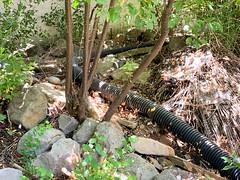 Upper Pond (bztraining) Tags: bzdogs bztraining