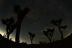 Meteor EDITED (PVA_1964) Tags: nikon nikkor d5 afs815mmfisheyezoom fisheye joshuatree night nightsky desert stars induro tripod meteor shootingstar comet verifiednotasatellite