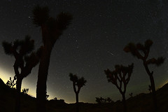 Shooting Star EDITED (PVA_1964) Tags: nikon nikkor d5 afs815mmfisheyezoom fisheye joshuatree night nightsky desert stars induro tripod meteor shootingstar comet verifiednotasatellite