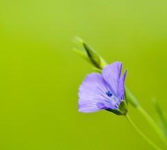 Nature's beauty! (vui.la9) Tags: