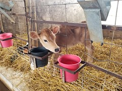 2019-07-07 15.01.54 (littlereview) Tags: southmountain maryland frederick 2019 littlereview summer southmountaincreamery farm barnyard animal blog