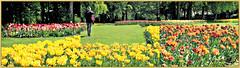 Floralia Brussels, Parc du Château de Grand Bigard, Dilbeek, Brabant flamand, Belgium (claude lina) Tags: claudelina belgium belgique belgië grandbigard brabantflamand floraliabrussels parc jardin fleurs flowers tulipes tulips