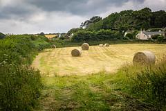 Modest Harvest (Rookie Phil) Tags: hay balesofhay outdoor field summer slapton devon rustic rural bucolic countryside landscape village cloudyday fujifilmxt3 xt3 xf1655mmf28 xf1655