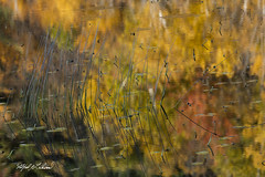 Tarn Reflection_27A7906 (Alfred J. Lockwood Photography) Tags: morning goldenhour flora grasses reeds leaves fallfoliage monet maine acadianationalpark thetarn autumn fall pond reflection abstract landscape alfredjlockwood nature fallcolor autumncolor autumnalcolor